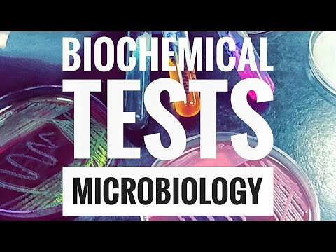 Microbiology Lab Practical Information Part 2