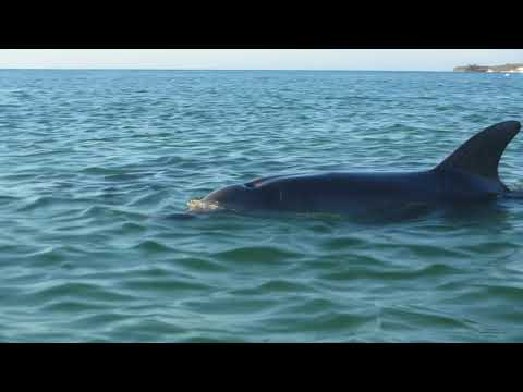 BEST EVER SWIMMING WITH DOLPHINS VIDEO MORETON ISLAND QUEENSLAND AUSTRALIA