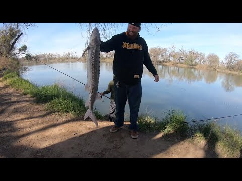 Epic Sturgeon And Striper Bank Fishing