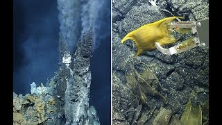 Hydrothermal Vent - What's for dinner? (UTD GSS STUDENT WORK)