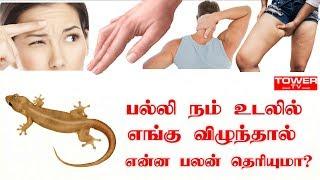 பல்லி நம் உடலில் எங்கு விழுந்தால் என்ன பலன் தெரியுமா? | palli vilum palangal in tamil | lizard myths