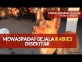 Mewaspadai Gejala Penyakit Rabies Disekitar