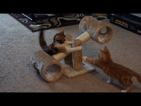 KITTENS Play w/ COOLEST Toy EVER!! - Teeter Totter