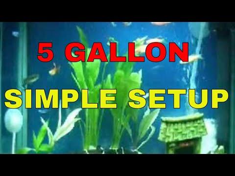 Aquarium sample setup for beginners 5 gallon fish tank for Good beginner fish