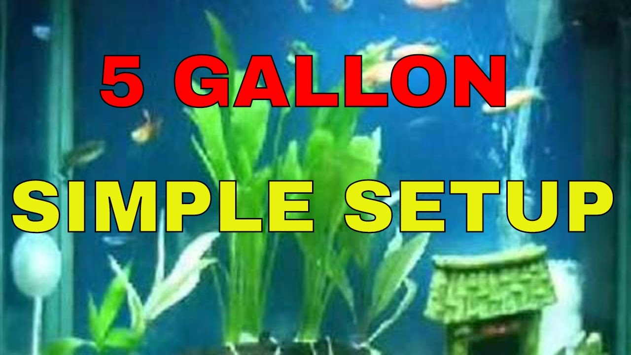 Aquarium Sample Setup for Beginners (5 Gallon Fish Tank ...