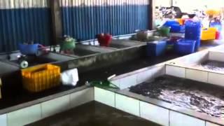 Fish farm. Vietnam