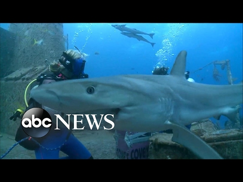 Inside the first-ever live 360 video of a shark dive
