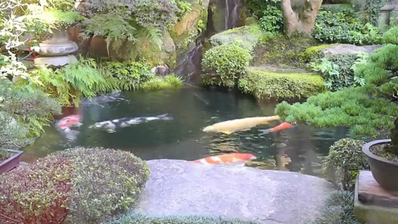 Modern koi blog 263 live from japan ein liter for Teich modern