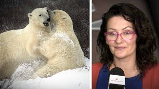 Polar bears aplenty! Feds reject Inuit hunting quota claim that numbers are high | Sheila Gunn Reid