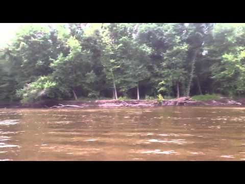 Mississippi Backwater