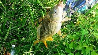 CÂU NGAY Ổ CÁ RÔ ĐỒNG BỰ,  DÍNH LUÔN 2 EM CHÉP CẢM GIÁC NÀO CHO BẰNG // Fishing in the rainy season