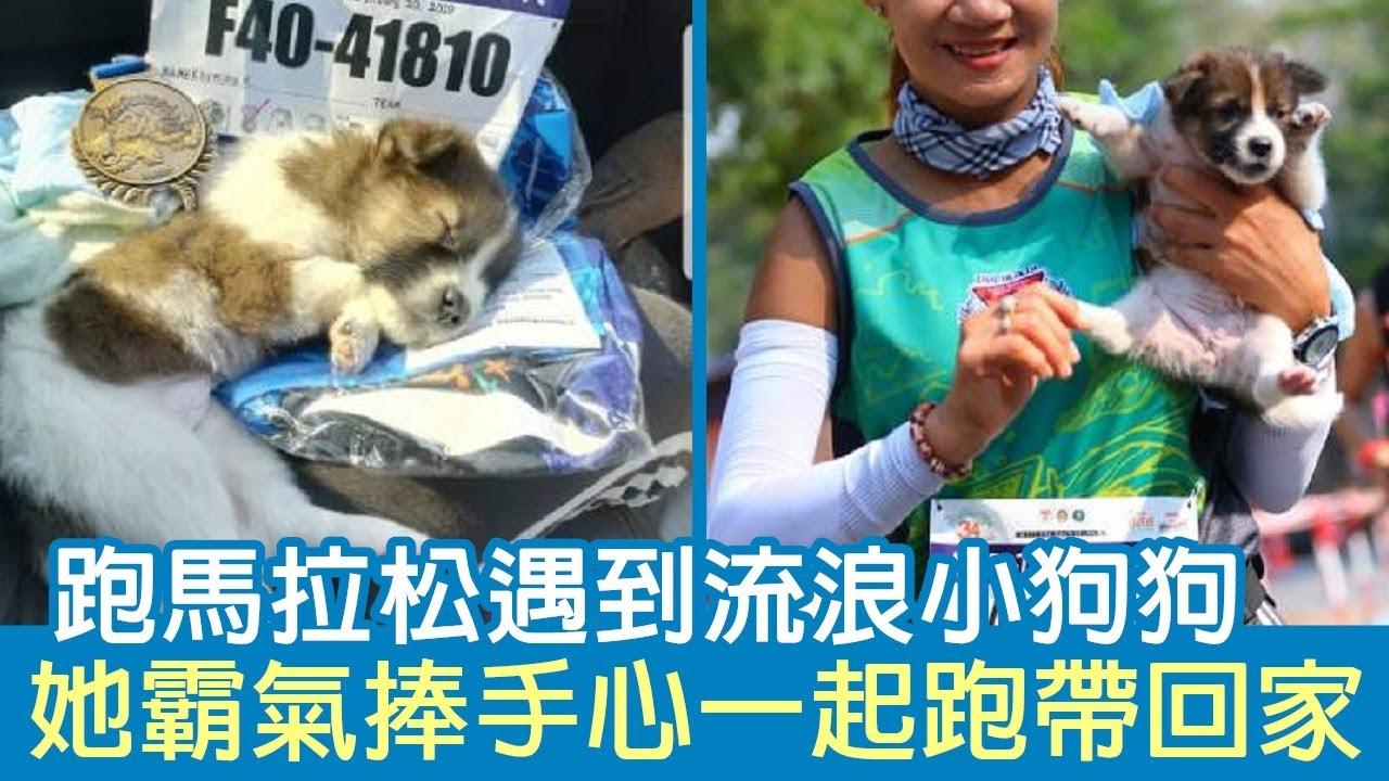 跑馬拉松遇到流浪小狗狗 她霸氣捧手心一起跑帶回家   狗狗搞笑