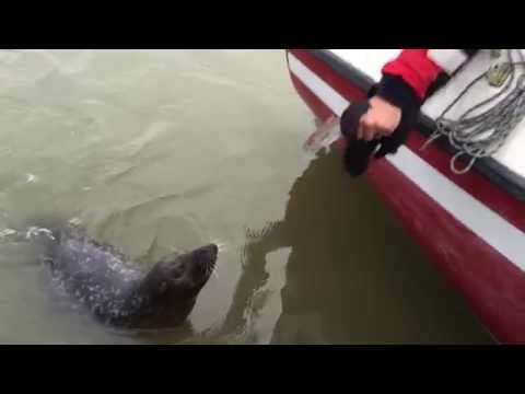 Feeding a seal by hand on the Medway!