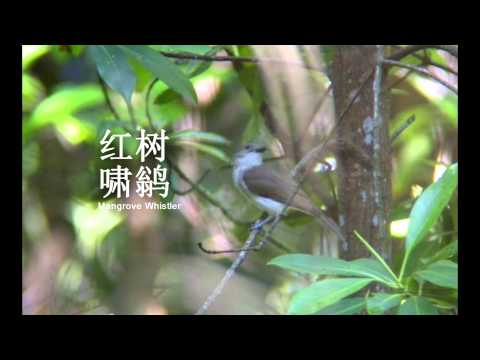 Birds of Peninsular Malaysia V2