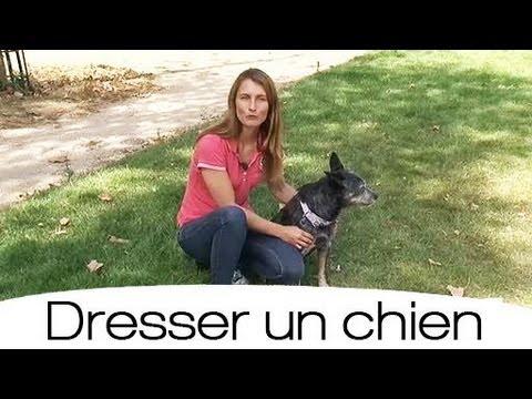 Comment apprendre à son chien à faire le mort ? - YouTube
