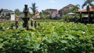 癒しのガムラン♪ バリ島ウブド周辺の緑な風景 bali relax healing thumbnail
