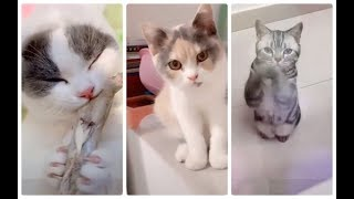 The cutest, cute cats and dogs part 13