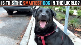 Is this the SMARTEST DOG in the World?!