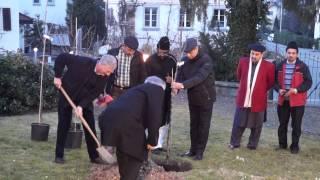 Tree planting in Bonstetten - Urdu