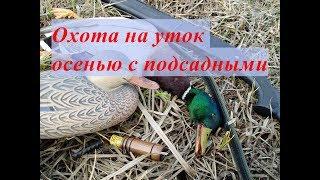 Охота на уток осенью с подсадными, выпуск №116 (UKR)