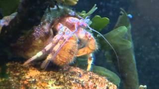 Exploration sous-marine en vidéo
