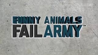 Funny & Crazy Animal Fail Compilation 2019