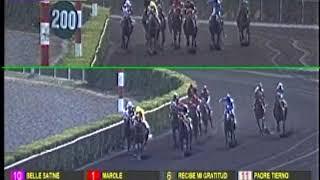 Vidéo de la course PMU PREMI CABO AROCA