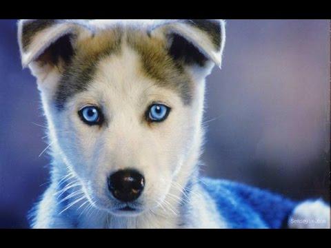 Dünyanın En Zeki 10 Köpek Irkı