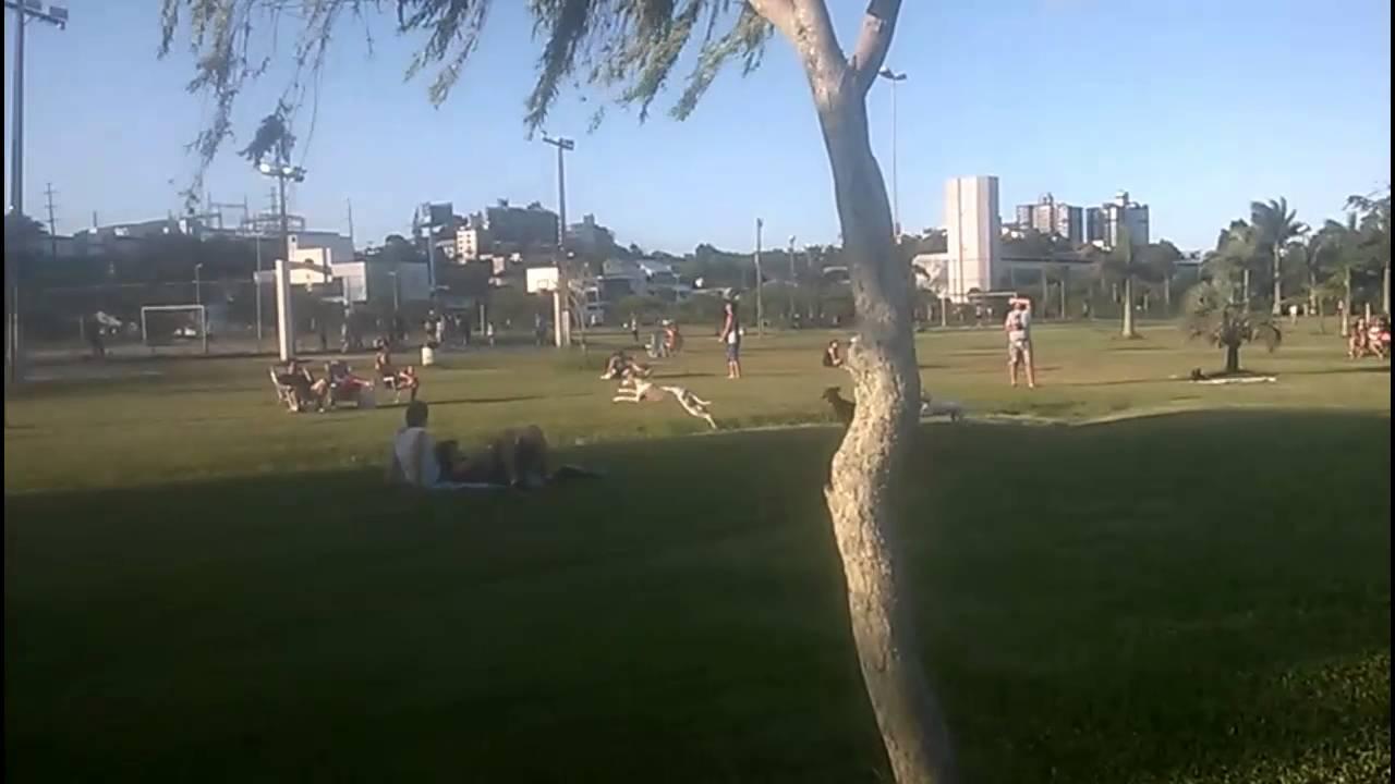 Crianças Se Divertindo No Parque: Cachorrada Se Divertindo No Parque De Coqueiros, Em