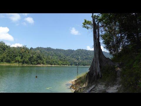 Reisedoku Malaysia (5): Belum Rainforest