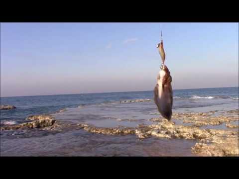 ловля кальмара с берега