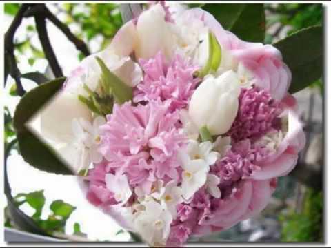 Les plus belles fleurs et les  plus rares