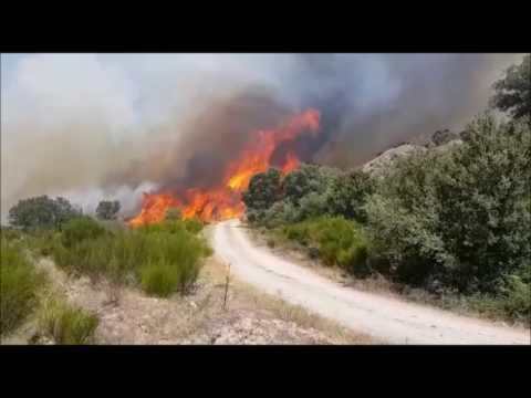 VÍDEO | Incendio en Pino del Oro-Provincia de Zamora