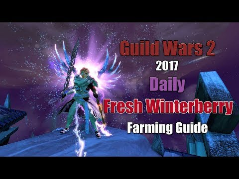 [GW2] 2017 Daily Gathering: Fresh Winterberry Farming Route in Bitterfrost Frontier!