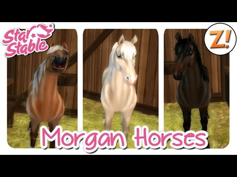 Star Stable [SSO]: Morgan Horse [Update 29.07.2015] | Let