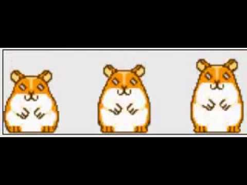 Hamster Song Original Youtube