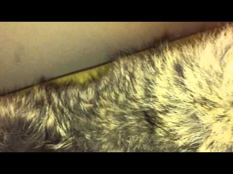 Canada Goose vest outlet fake - Fake Canada Goose Banff Jackets Review - YouTube