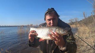 Рыбалка с Берега на Реке Ловля Голавля на Донку Закидушку