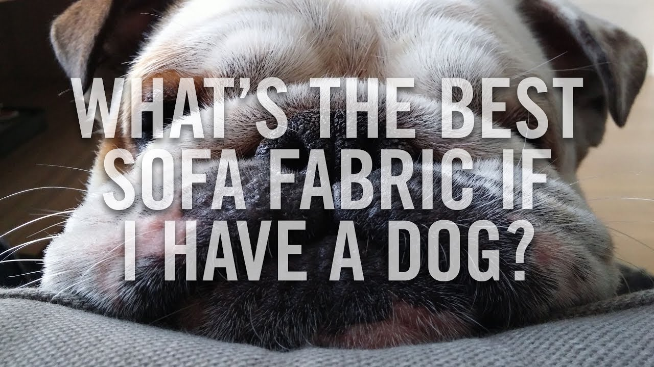 Dog Friendly Sofa Fabrics - Pet Friendly Sofas - Best Pet Friendly Sofas -  Roger and Chris
