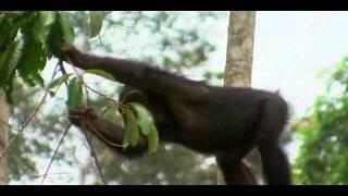 Partenariat Espagne/PNUE: Parc national de Kahuzi-Biega, RDC