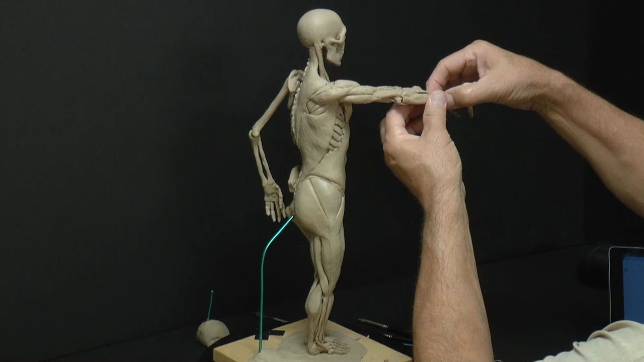 Awesome Anatomy For Sculpture Pictures - Physiology Of Human Body ...