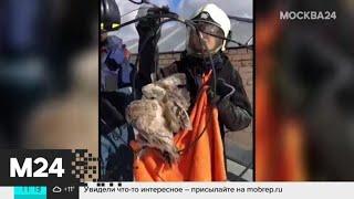 Спасатели сняли застрявшую на крыше жилого дома сову - Москва 24