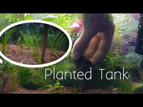 Planted Tank - Failed