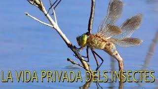 La vida privada dels insectes