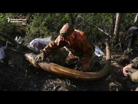 Vodka, Amputation, Ivory -- A Siberian Mammoth Hunt