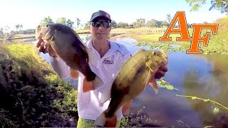 Miami Lakes Lures v Live bait Fishing for exotic fish Ft TallFishermanJ EP.389