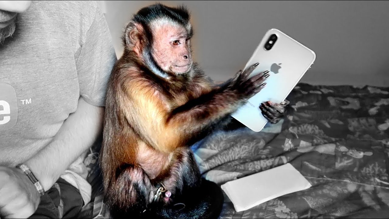 official photos 94f65 0c02f Monkey Boo Plays with iPhone X!