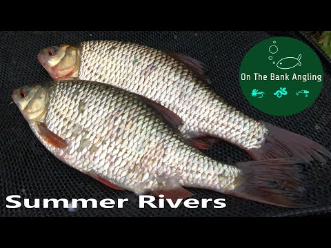 River Fishing In Summer