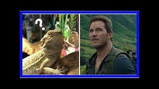 Chris Pratt filmó su propia versión de Jurassic World... ¡Con su iguana!