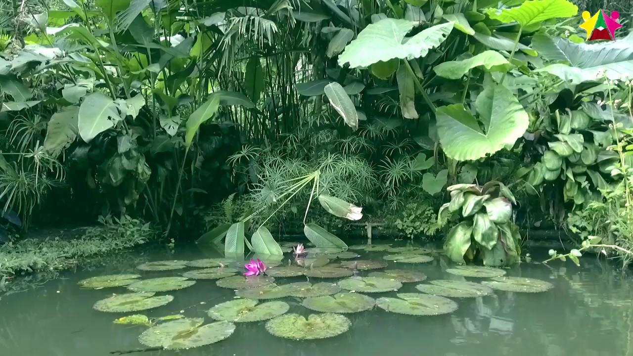 Jardin Botanico José Celestino Mutis de Belén de Umbría - Alcaldía ...